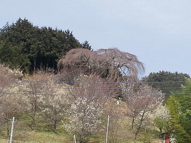 okkaduma_01.jpg